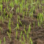 grass-seed-1